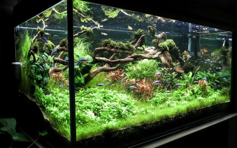 Bố trí hệ thực vật thủy sinh giúp làm trong nước bể cá cảnh