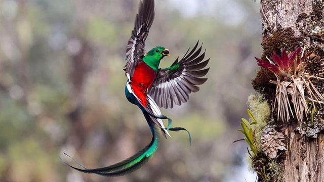 các loài chim trên thế giới