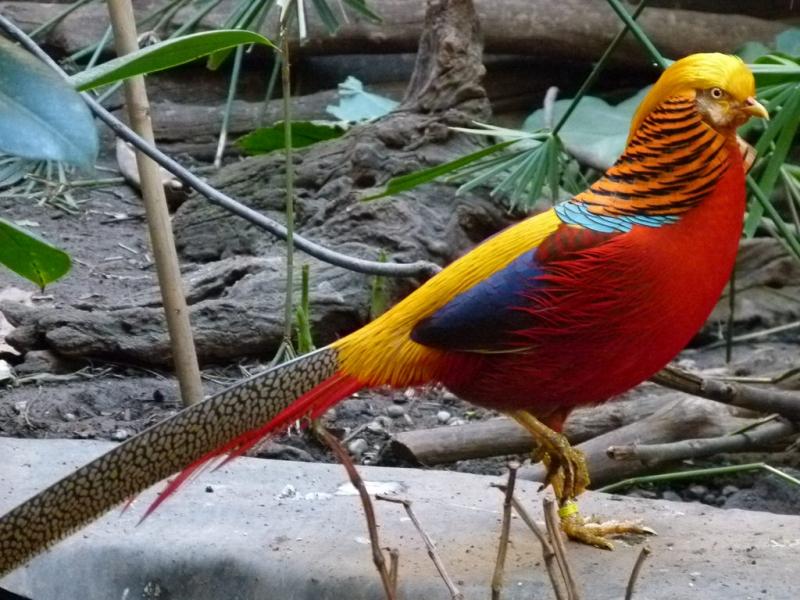 các loài chim đẹp nhất trên thế giới