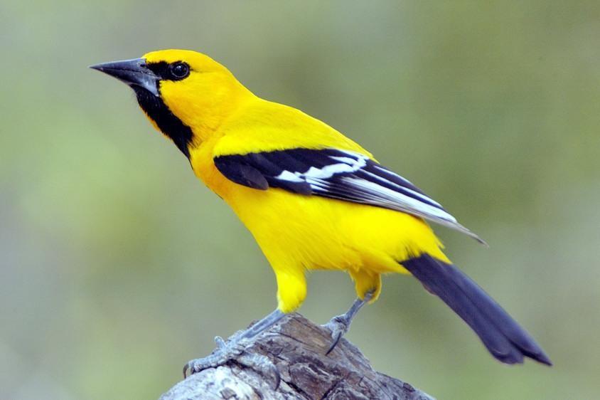 các loài chim đẹp ở việt nam