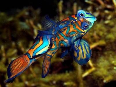 những loài cá cảnh đẹp nhất thế giới