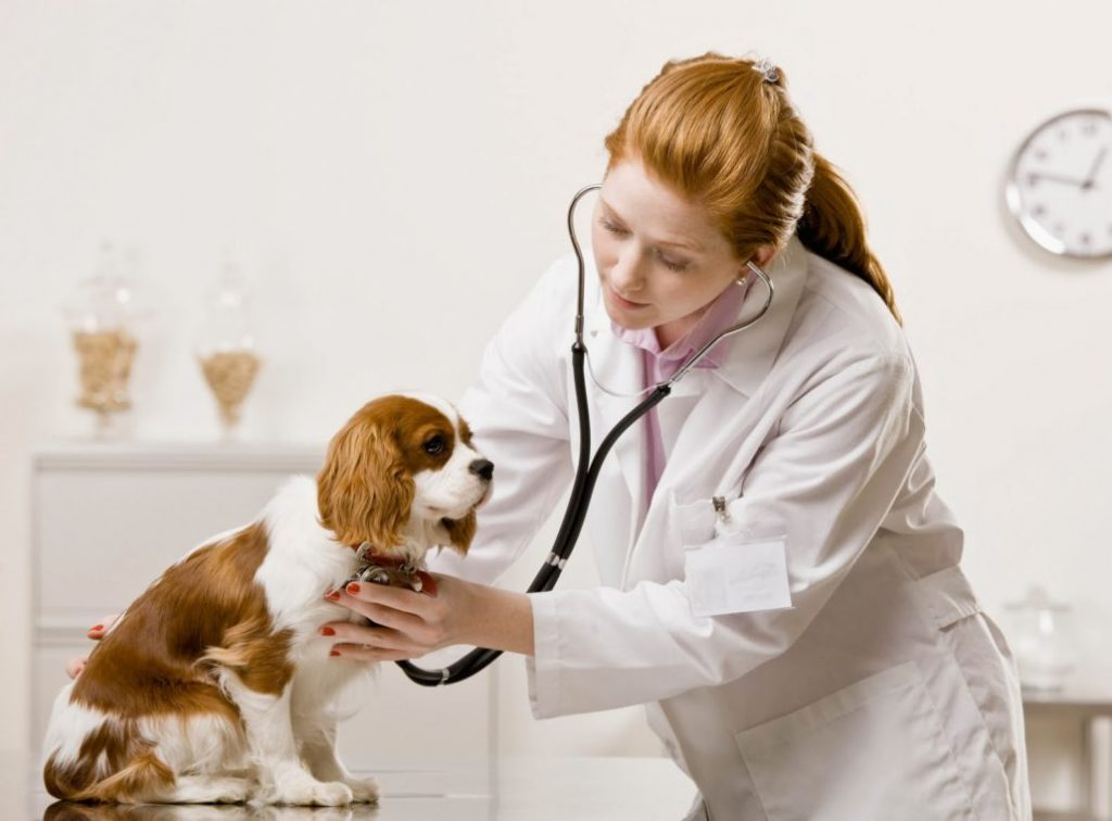ngành thú y đối với nữ