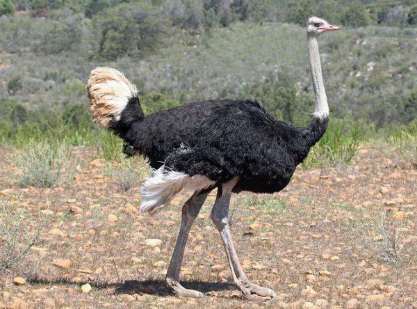 chim to nhất thế giới