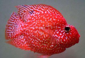 loại cá cảnh dễ nuôi đẹp