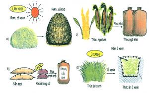 Thức ăn vật nuôi có nguồn gốc từ đâu?