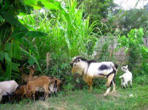 vật nuôi có giá trị kinh tế cao
